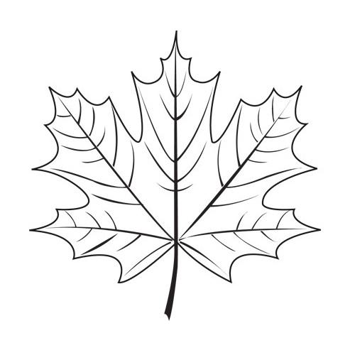 Maple leaf the doodler edu
